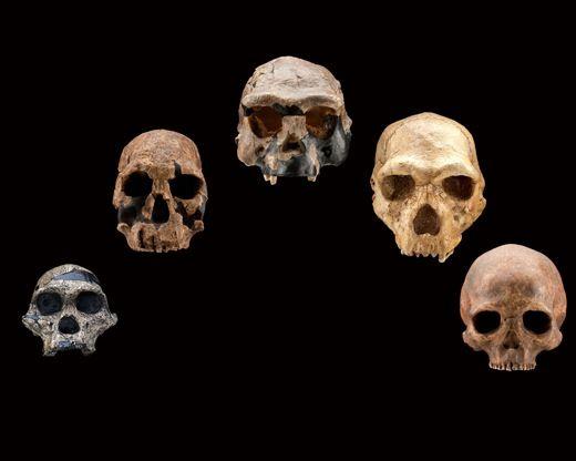 skulls_arc_frontal.jpg