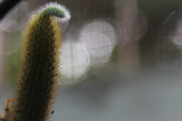 New born cactus thumbnail