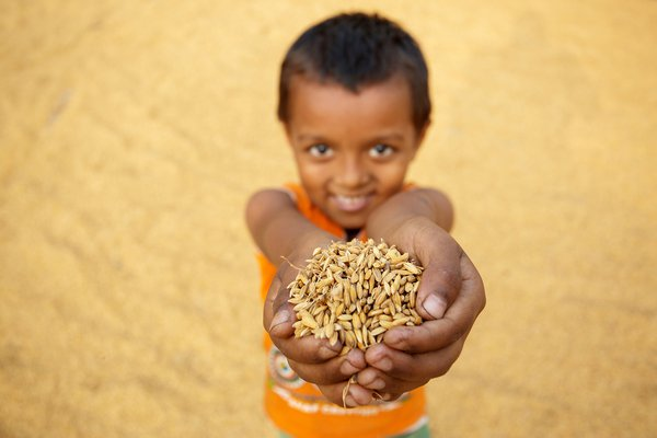 A kid offering handful of dry paddy. thumbnail