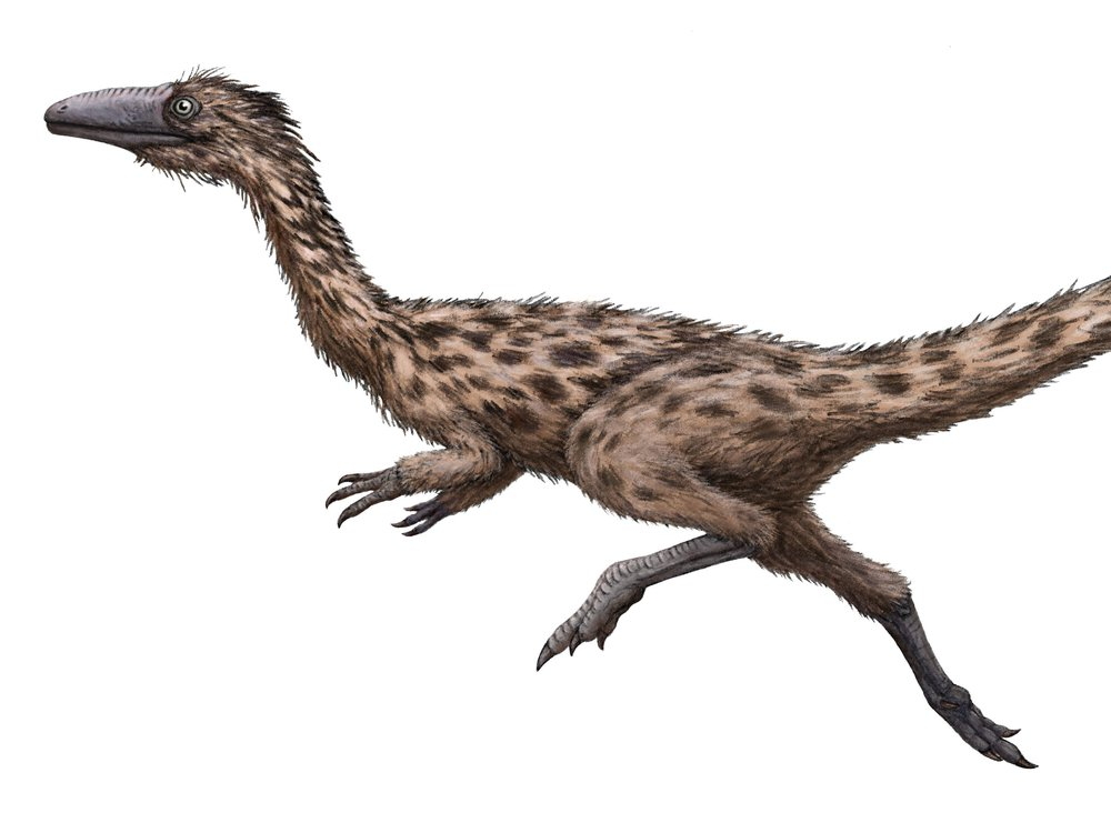 The image shows a light brown feathery dinosaur with dark brown spots. The dinosaur is shown in a sprinting pose against a white background