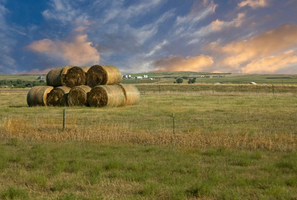 Hay Rolls For Winter thumbnail