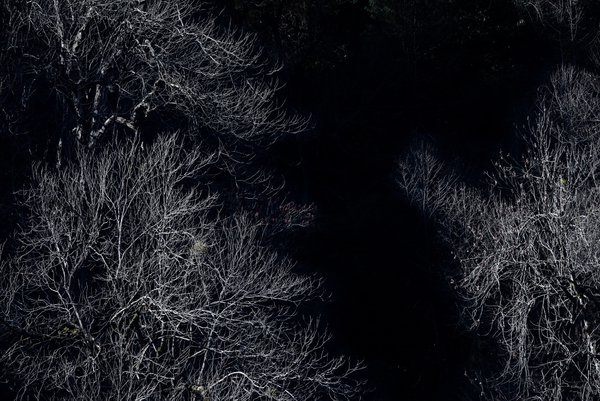 Leafless trees in a dark background thumbnail