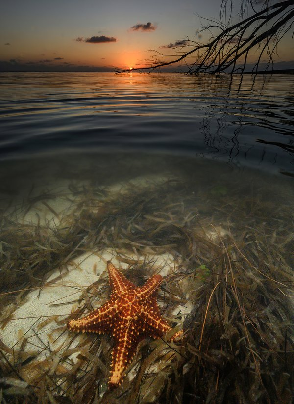 Starfish at Starfish Point, Grand Cayman thumbnail
