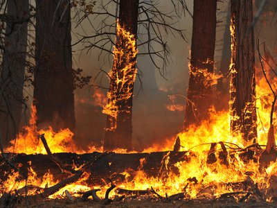 Annual forest fires blaze on the floor of Yosemite Valley, California in 2015.