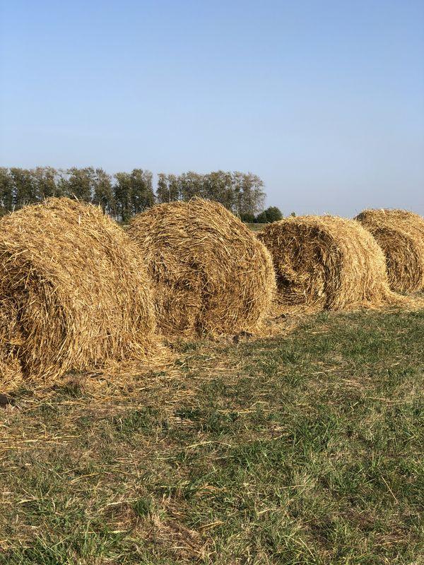 Haystacks thumbnail