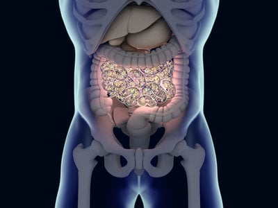 The microbes in human guts, including bacteria, archaea, fungi and viruses, play a significant role in how our bodies respond to diseases and treatments.