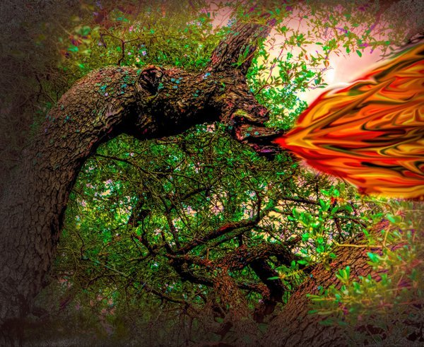 A Dragon Tree Limb Comes Alive thumbnail