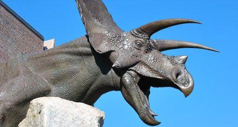 A sculpture of Torosaurus