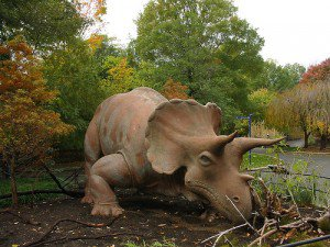 20110520083135uncle-beazley-triceratops-zoo-300x225.jpg