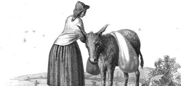 Bolivian-donkey-big-hero.jpg