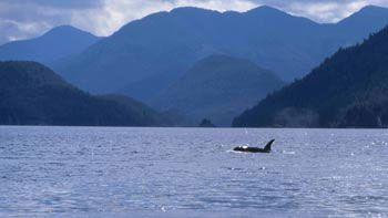 Luna in Vancouver Island's Nootka Sound