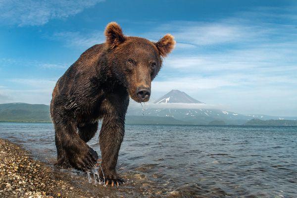 Brown Bear's Realm thumbnail