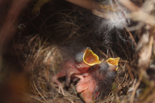 A Glimpse into a Bird's Nest thumbnail