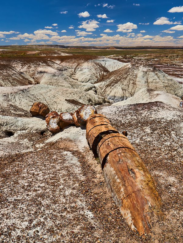 Arizona Petrified Forest Nation Park Logs Rising from Millions of Years of Volcanic Ash thumbnail