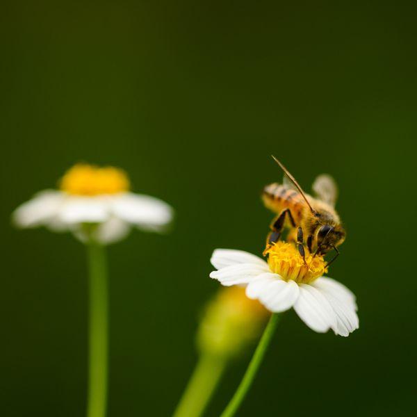 Bee on Flower thumbnail