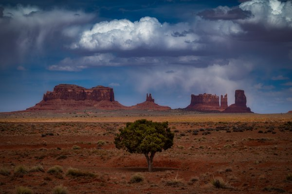 A Lonely Tree from Monument Valley thumbnail