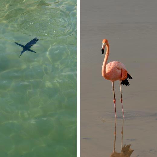 Penguin and flamingo