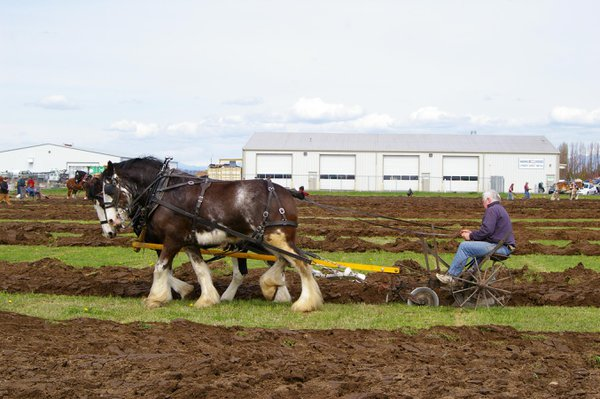 Horse drawn plow competition thumbnail