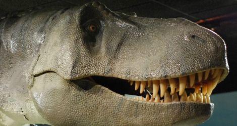 The head of Tyrannosaurus at the Las Vegas Natural History Museum.