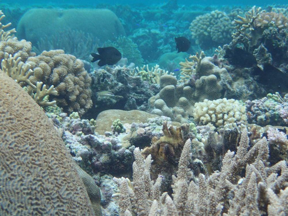 Samoa coral reef