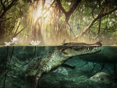 The Crocodylus checchiai  skull analyzed in the new paper came from an approximately 10-foot-long reptile.