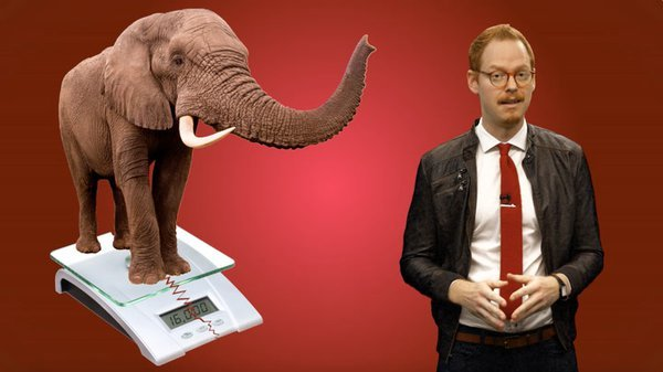 Preview thumbnail for Ask Smithsonian: Can Elephants Jump?
