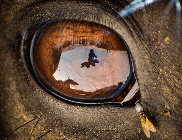 Our World Through A Horse's Eye thumbnail