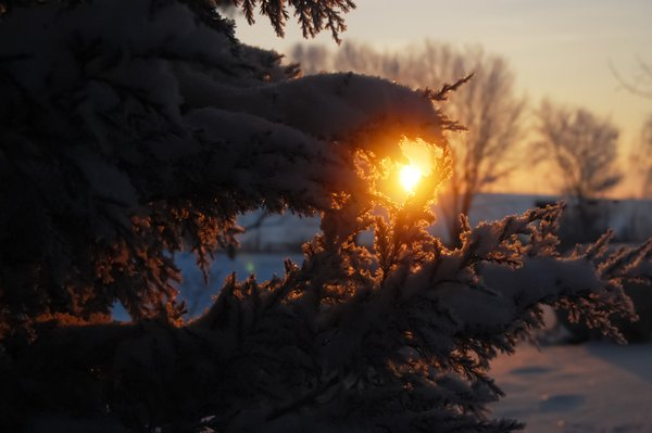 Still at Sunrise after Snow, Illinois thumbnail