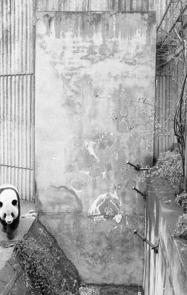 Panda on edge thumbnail