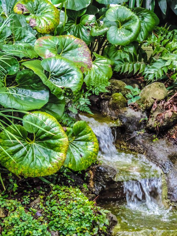 Waterfall Pond thumbnail