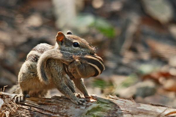 a squirrel take away her baby to eschew the risk. thumbnail