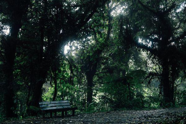 Jungle Picnic thumbnail