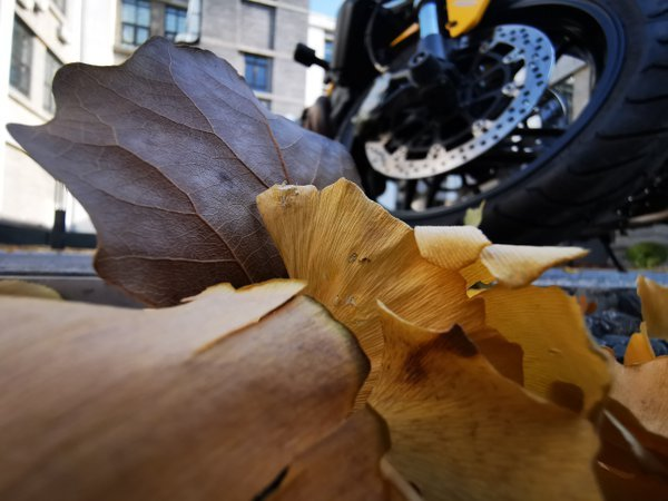 Autumn leaves by a motorcycle thumbnail