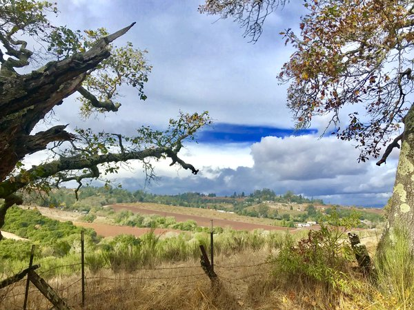 California Wine Country  thumbnail