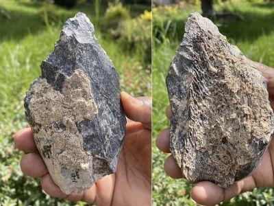 Roughly 1.4 million years ago, Homo erectus made this hand ax out of a hippopotamus' thigh bone.