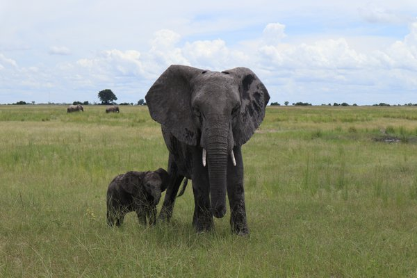 Mother and baby elephant thumbnail