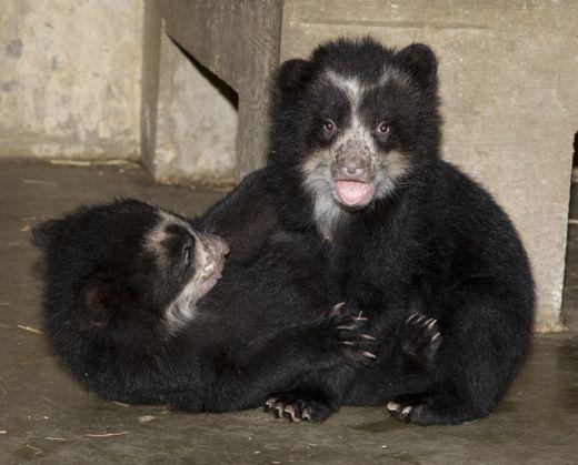 bears1.jpg