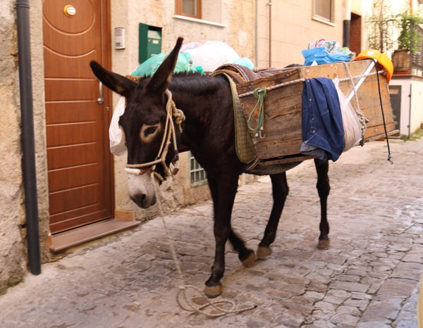 Cosima, the Recycling Donkey thumbnail