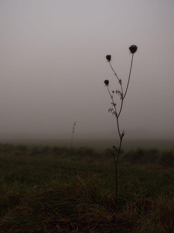 Misty Fields thumbnail