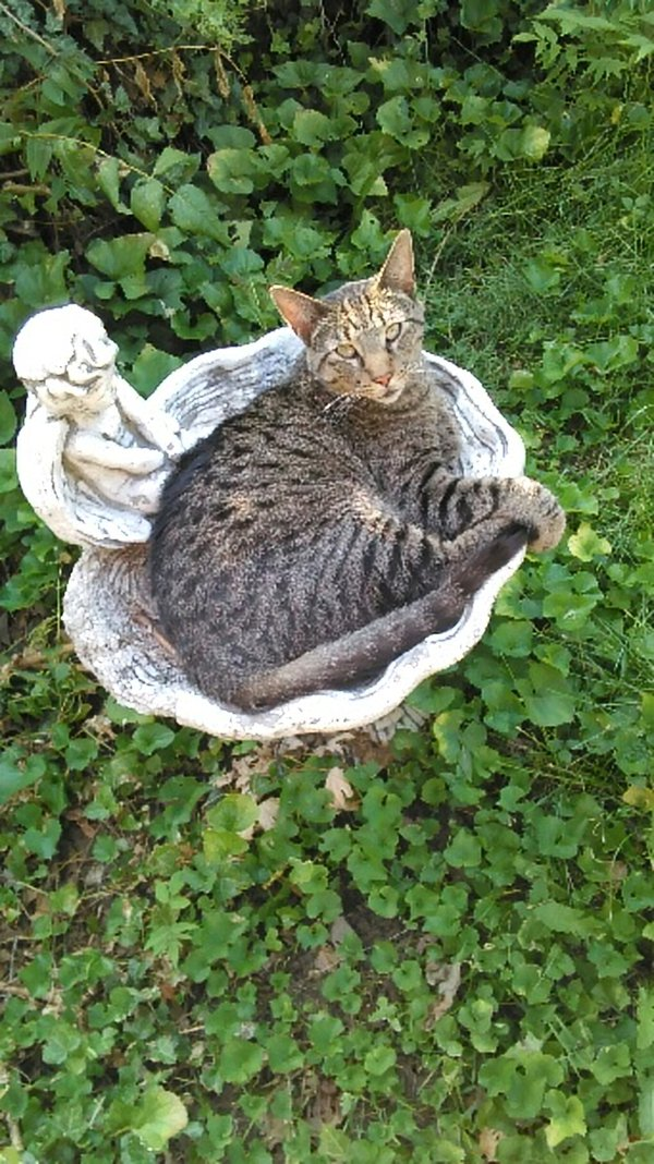Koa the Cat relaxing in the Birdbath thumbnail