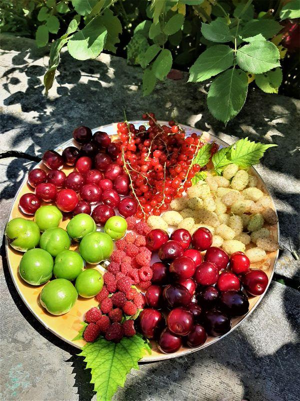 fruits thumbnail