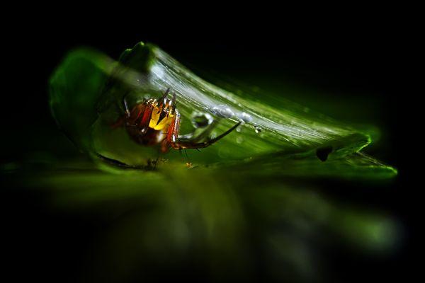 Spider Shelter thumbnail