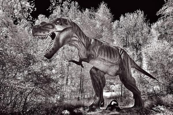 Dino Walk in Nature 6 thumbnail
