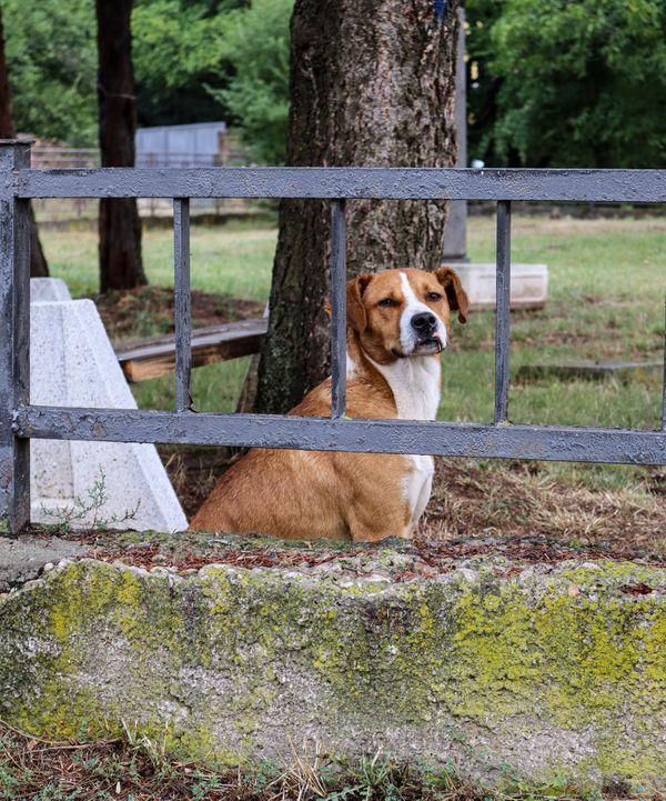 Stray dog behind bars thumbnail