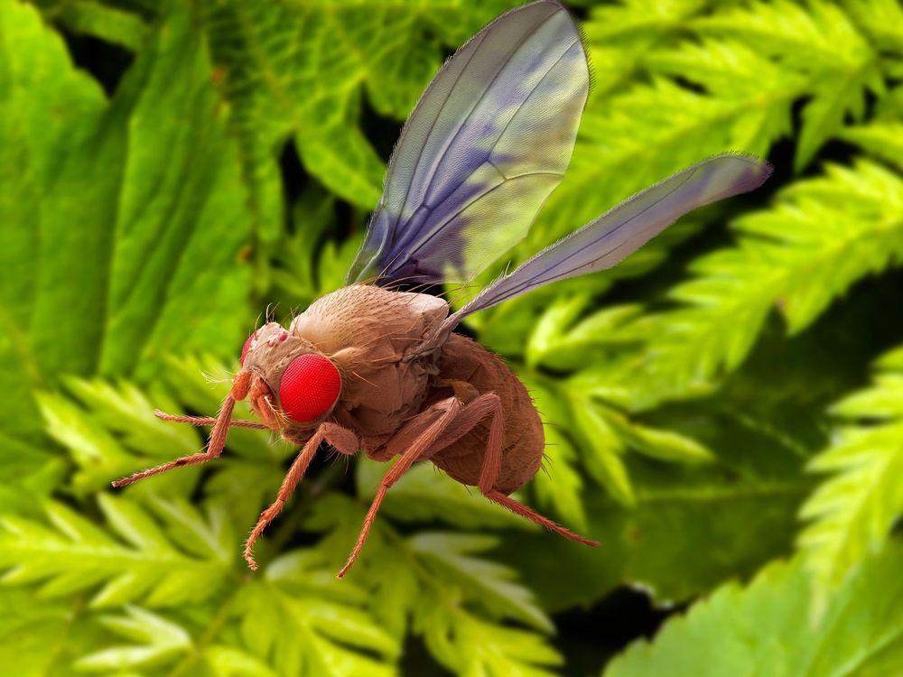 05_29_2014_fruit fly.jpg