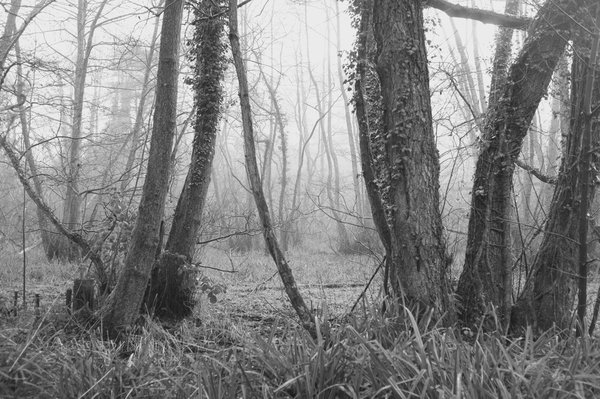 Misty Morning in the Woods thumbnail