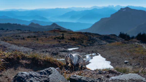 A Marmot's Paradise thumbnail