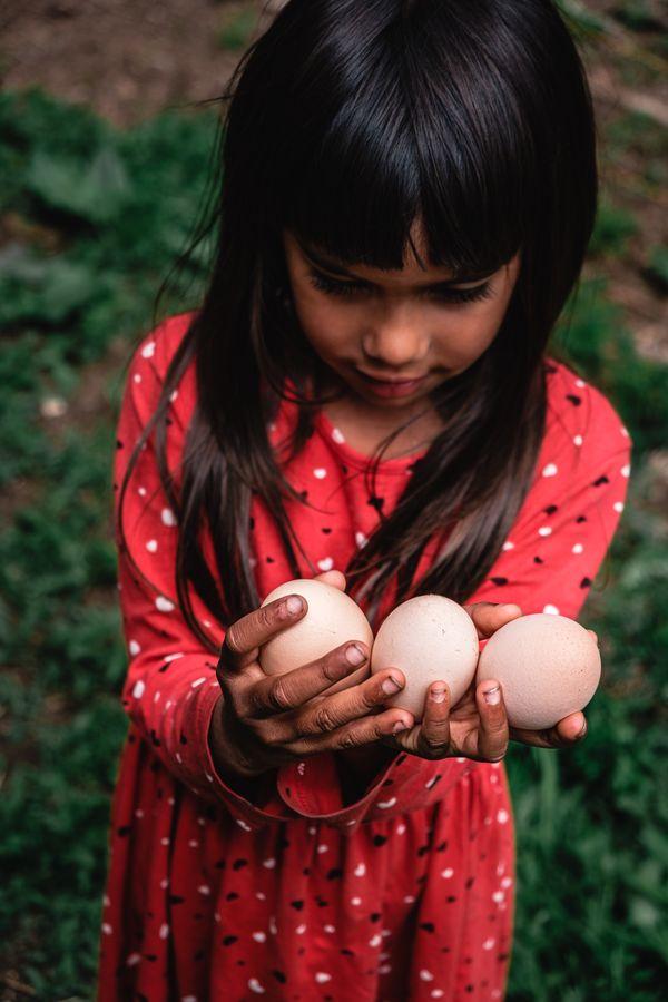 Freshly laid eggs thumbnail