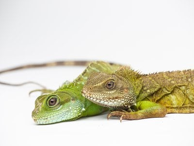 The almost 3-year-old female offspring (left) and her 12-year-old mother (right)