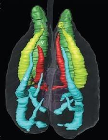 20110520083204alligator-respiratory-system.jpg